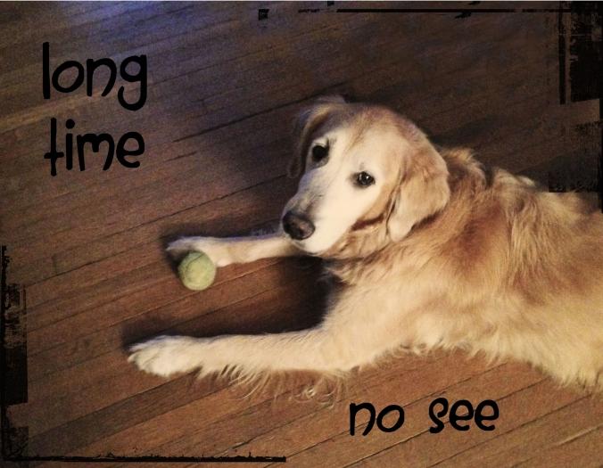 Allow me to introduce Yukon (aka Dogface).